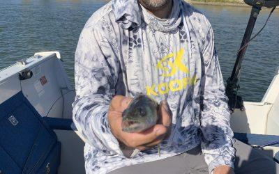 Missouri River Fishing Report-October 2nd, 2021